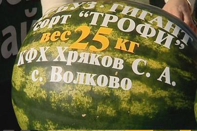 Рекорды «Амурагропрода»: арбуз весом 25 кило и бык — под 8 центнеров