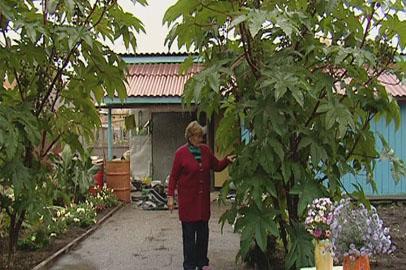 Благовещенская пенсионерка создала на своем огороде атмосферу Африки