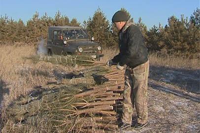 В этом году амурчанам заготовят мало елок