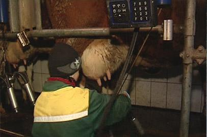 В Приамурье растут надои молока