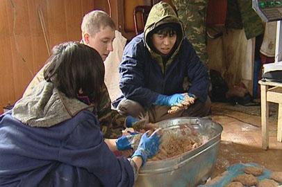 Студенты из Японии накормили амурских кабанов витаминными котлетами