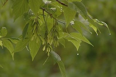 В ближайшие дни в Приамурье будут идти дожди
