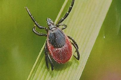 С начала сезона от укусов клещей пострадали больше тысячи амурчан