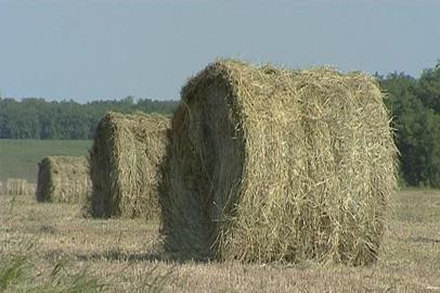 Амурские аграрии убирают обильный урожай кормовых трав
