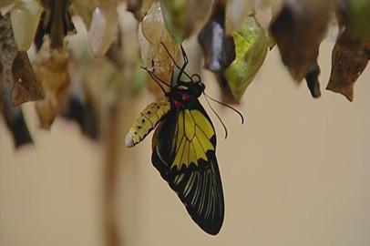В Благовещенске открылась выставка живых экзотических бабочек