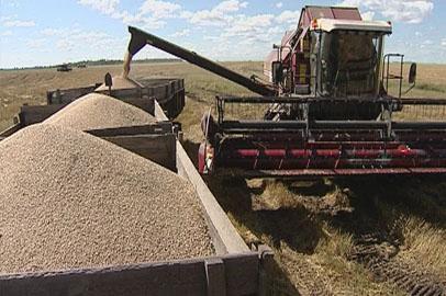 Приамурье пока заготовило меньше трети от необходимого объёма кормов