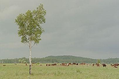 Крупные хозяйства смогут выкупать арендованные земли на льготных условиях