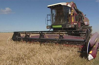 Амурские аграрии значительно продвинулись в уборке урожая