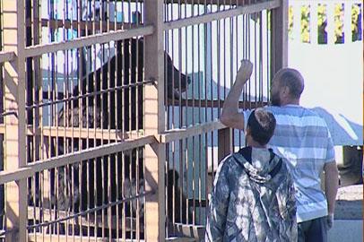Благовещенские медведи Маша и Миша вернулись домой