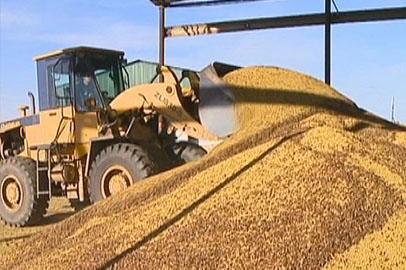 Эксперты не прогнозируют рост экспортной цены на сою