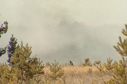 В Приамурье снизилось количество природных пожаров