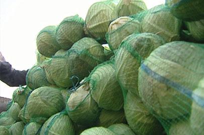 В Благовещенск прибыли 500 тонн капусты из Тюменской области