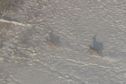 Охотоведы с вертолета подсчитали обитателей амурской тайги