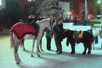Катанием на лошадях отметили Новый год благовещенцы