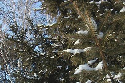 На севере Приамурья температура воздуха опустится до -45 градусов
