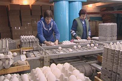 В Приамурье наблюдается резкое колебание цен на куриное яйцо