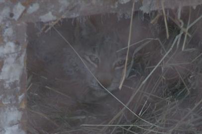 Полугодовалого рысенка спасли в Тамбовском районе