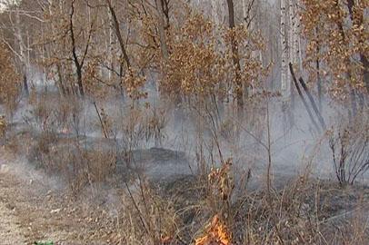 В двух районах Приамурья введён особый противопожарный режим