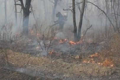 В Приамурье раньше обычного объявлен весенний противопожарный режим