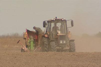В Приамурье в самом разгаре сегодня посадка картофеля