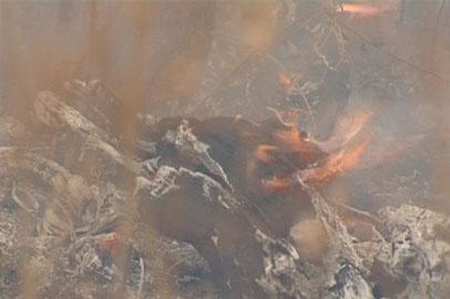 Пожарные призывают амурчан не разводить огонь на природе и дачах