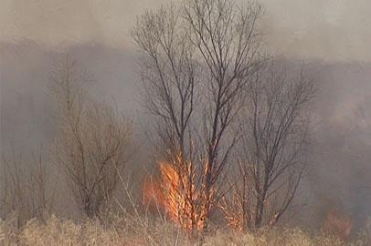 Несмотря на дожди, опасность возгораний в Приамурье сохраняется