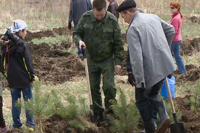 Почти 5 тысяч саженцев хвойных деревьев высадили в Благовещенском районе