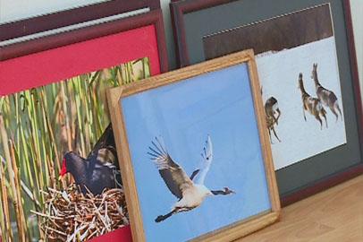 В областном краеведческом открывается выставка о Муравьёвском парке