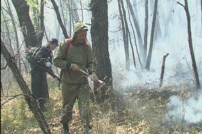 Прошедшие дожди понизили класс пожарной опасности в Приамурье