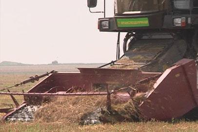 Амурские растениеводы приступили к уборочной кампании