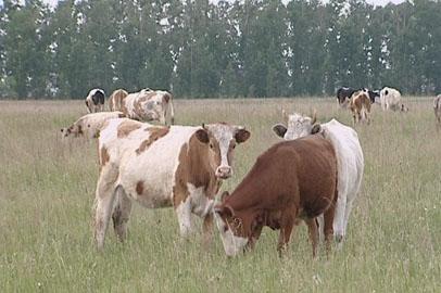 В Благовещенске обсудили вопросы охраны здоровья сельхозживотных