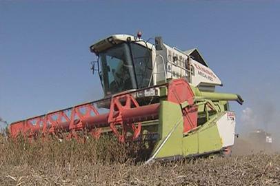 Амурские аграрии намолотили уже более ста тысяч тонн сои