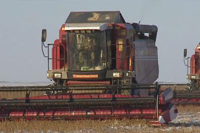 Белорусские механизаторы помогают амурчанам собирать рекордный урожай сои