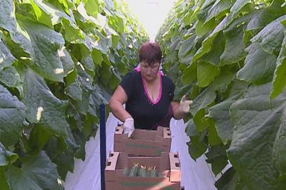 Опыт передовых сельхозрегионов страны внедрят в Амурской области