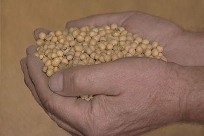 Побившие рекорд амурские соеводы планируют удвоить урожайность