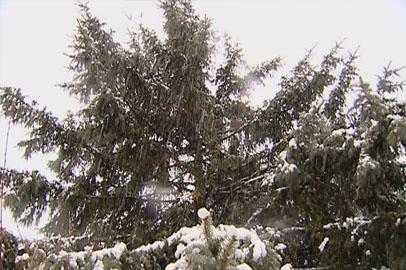 На большей части Приамурья сегодня ночью ожидается снег