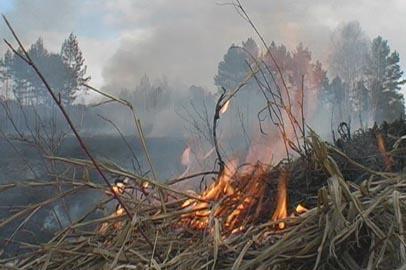 На территории Амурской области введен режим ЧС из-за лесных пожаров