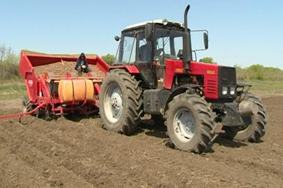 Амурские овощеводы перевыполнили план посадки картофеля