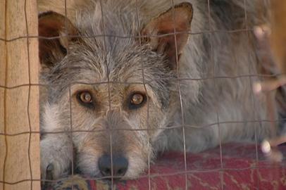 Благовещенские зоозащитники не могут добиться наказания для убийцы щенка