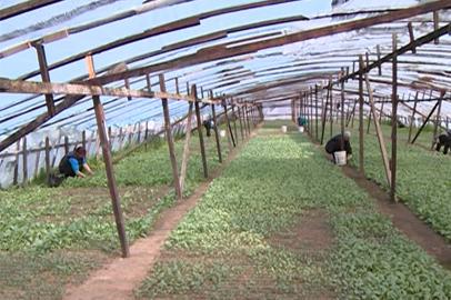 Повышение цен на местные овощи ожидается в Приамурье