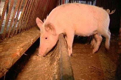 Власти Приамурья делают упор на развитие животноводства