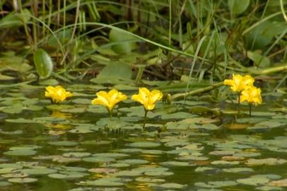 Амурский фермер создал озеро на месте бывшей свалки