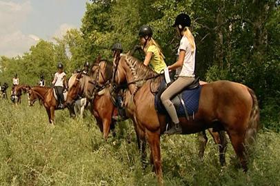 Спортивное ориентирование верхом на лошадях провели в Благовещенске