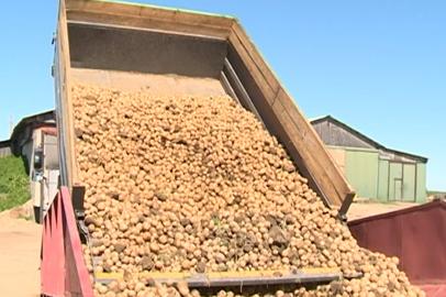 Закупочная цена амурских овощей за год выросла вдвое