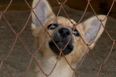 Власти помогли вернуть свет в благовещенский приют для животных  «Остров спасения»