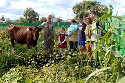 Журналисты подарили корову многодетной семье из Гродеково