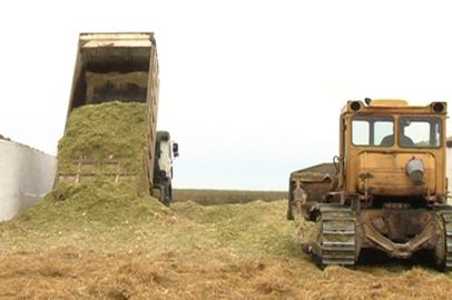 Амурские аграрии превысили план по заготовке сена на зиму, в полном разгаре закладка силоса
