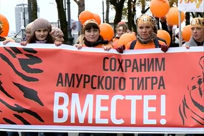 День Тигра в Благовещенске отметили рыже-черным шествием