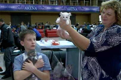 В рамках выставки кошек в Благовещенске впервые провели моноплеменное шоу