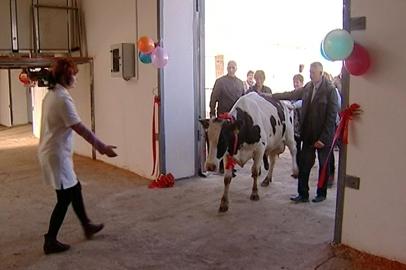 Животноводство нового уровня развивают в Константиновском районе